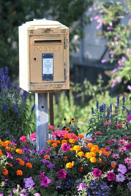 DIY Gardening: How To Beautify Your Garden