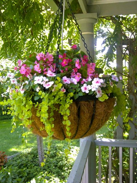 Top super hanging flower basket ideas julia palosini for How to hang flowers