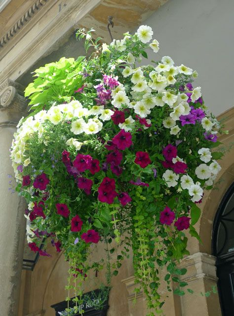 Best Flower Combinations For Hanging Baskets : Top super hanging flower basket ideas amelia pasolini