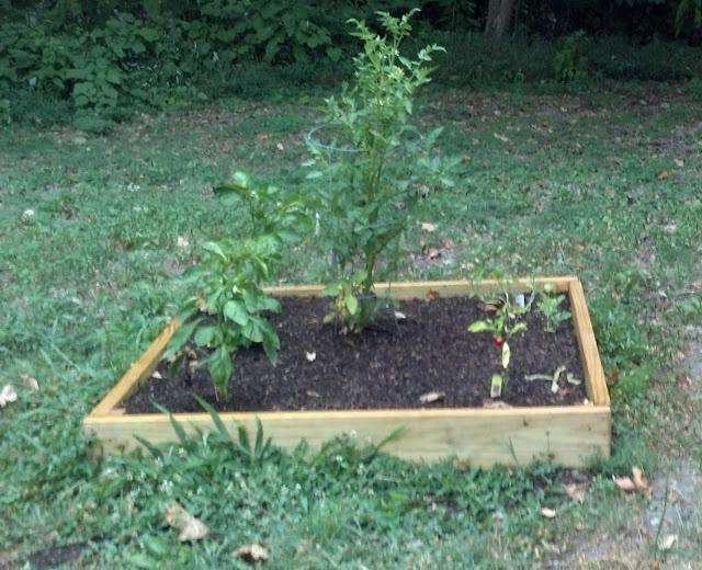 DIY Gardening: How To Plant Vegetables In Your Garden
