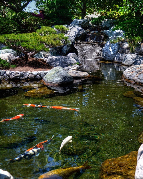 Diy gardening how to make a pond in your garden julia for Koi pond design with bridge