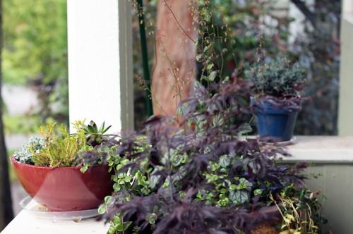 porch plants bowls